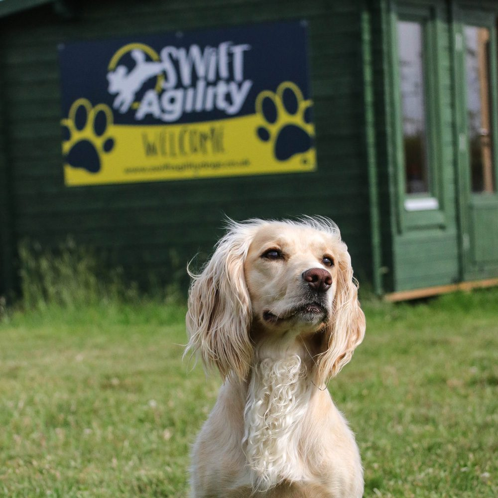 Swift Agility Dogs Website Photos & Drone Footage in Somerset