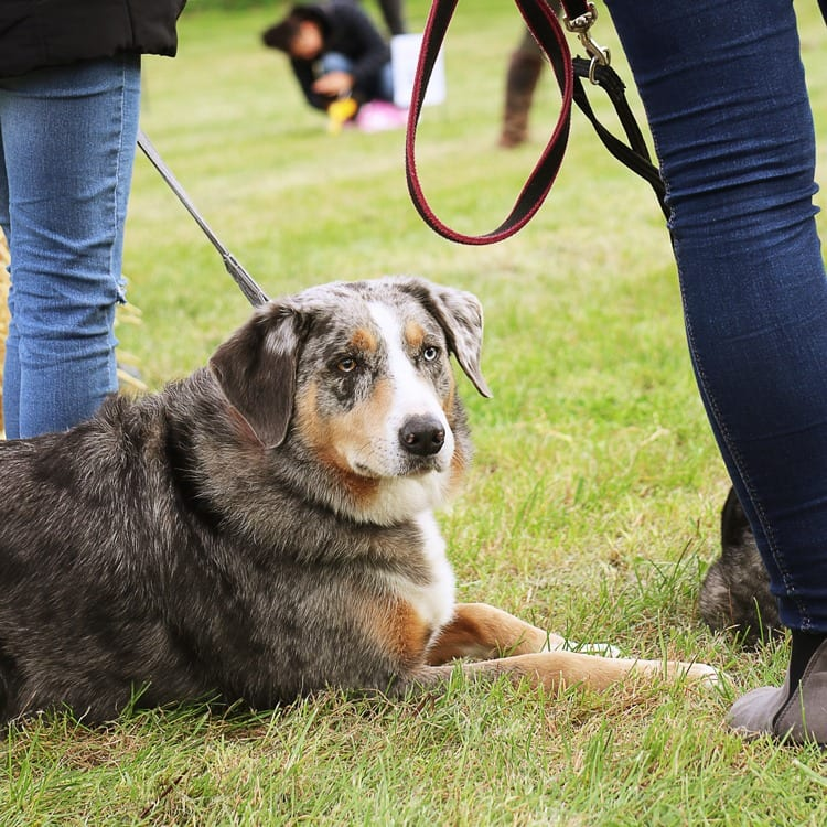 Handsome Dog at our Easter Fayre