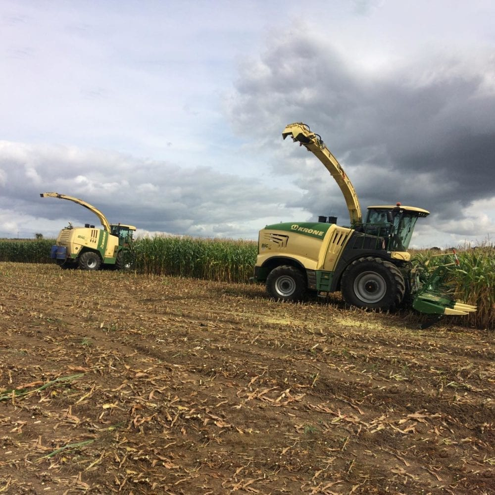 Harvesting crops for renewable energy at Frogmary Green Farm