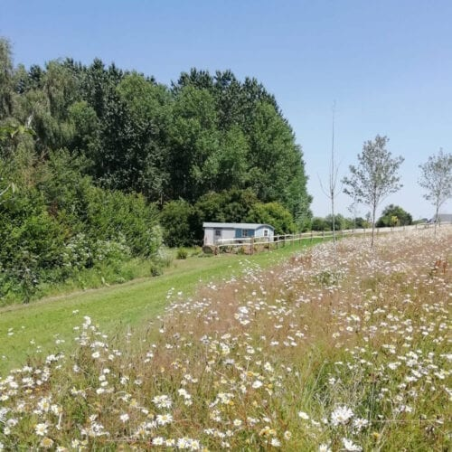 Frogmary's Shepherd Huts surrounded by wildflowers