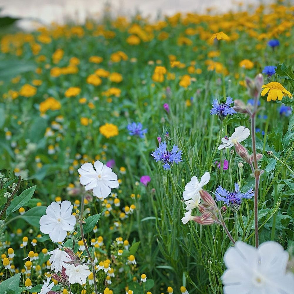 Wildflower meadow at Farm and Field Cafe