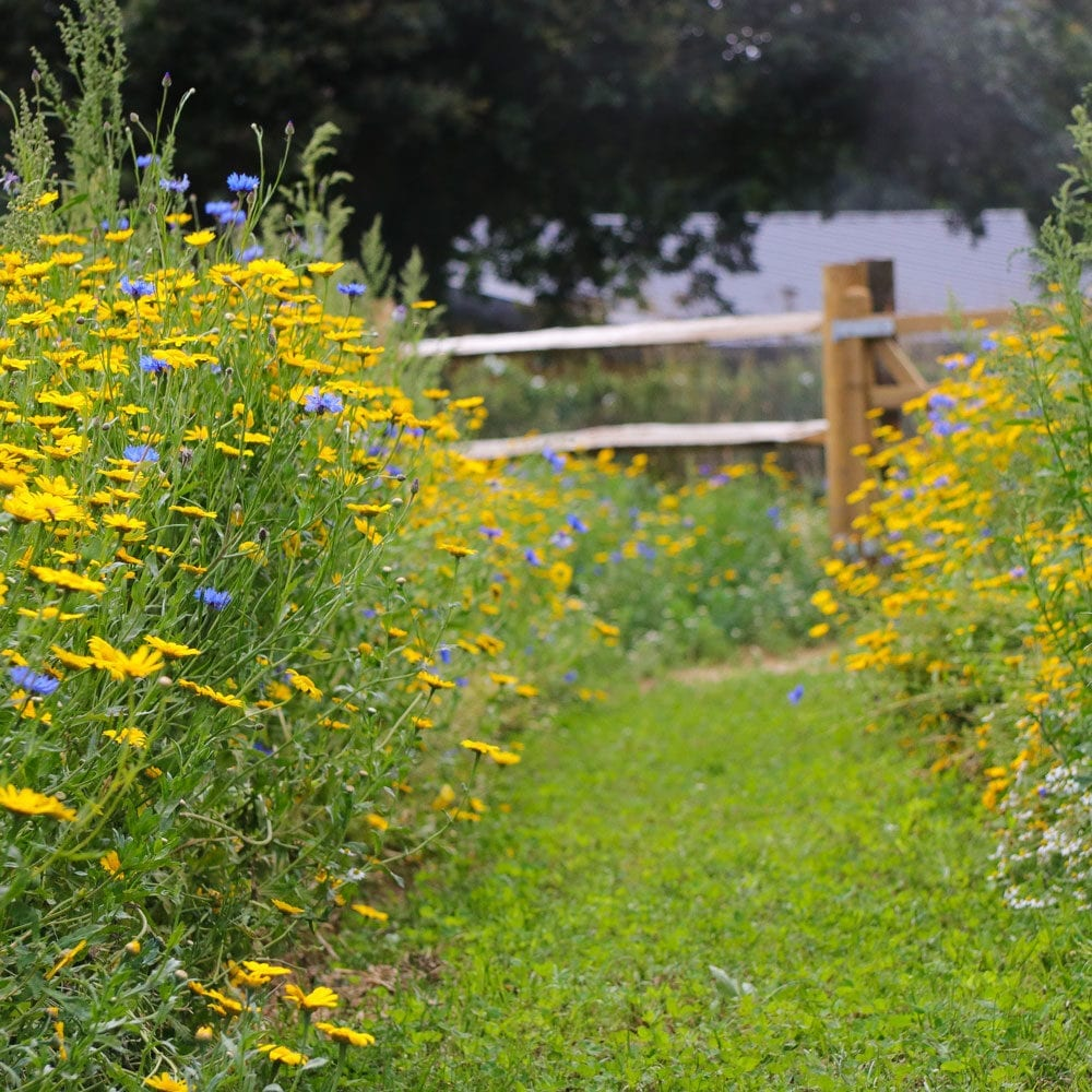 Frogmary's wildflowers and care for the environment