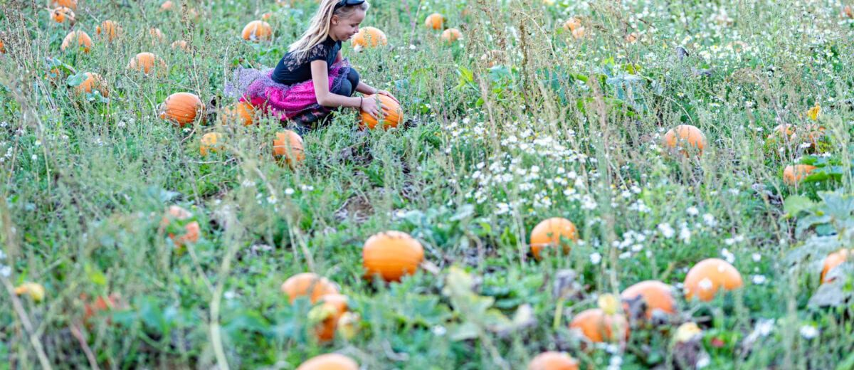 Frogmary's Pumpkin Picking
