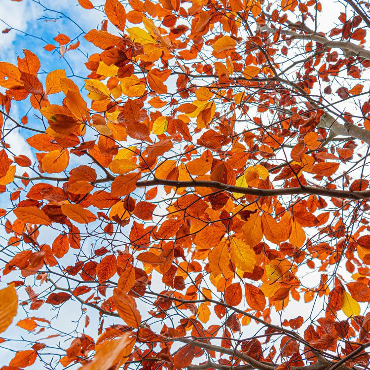 Autumn events at Frogmary