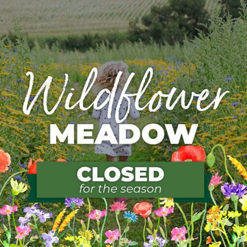 Wildflower meadow closed for the season