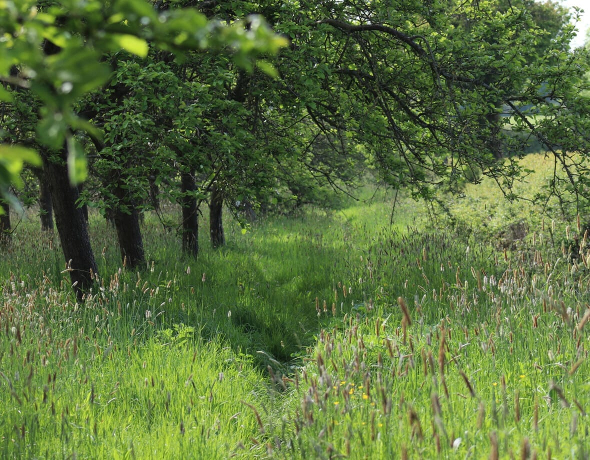 Explore Somerset Orchards