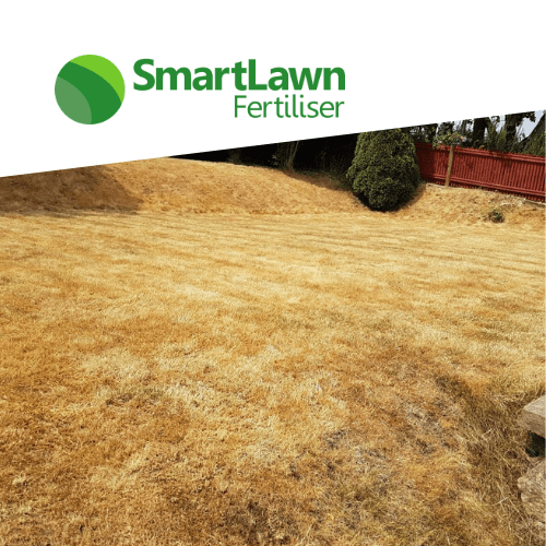 What causes lawn scorch box
